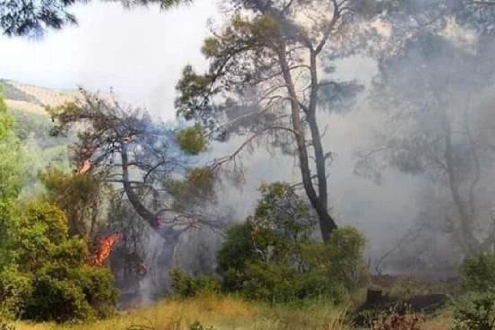 الاحتلال التركي حرق أكثر من 11 ألف هكتار من غابات عفرين