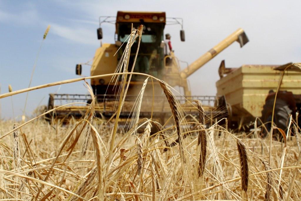 انتاج وفير للموسم الزراعي في مناطق شمال وشرق سوريا