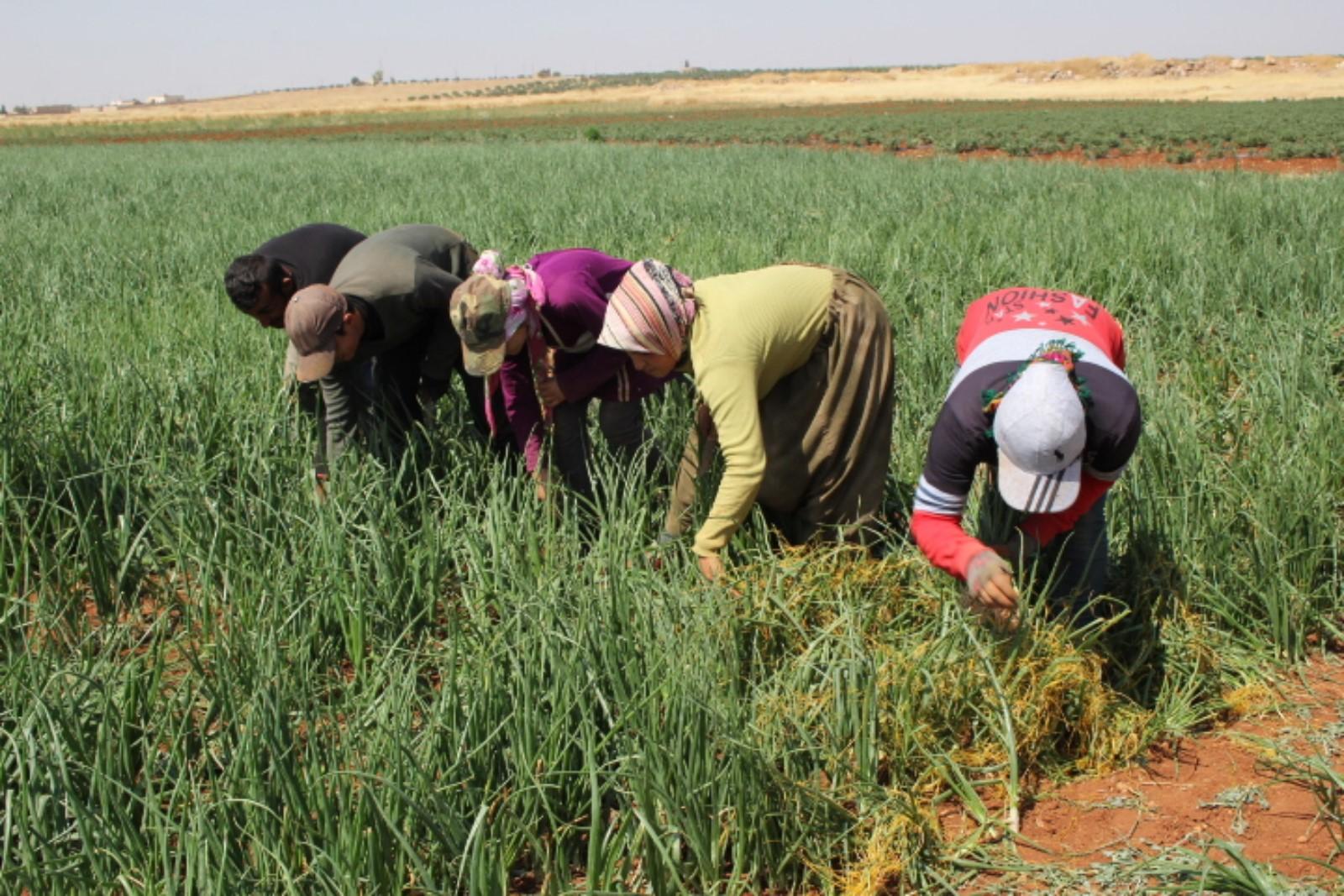 نساء عفرين يعملن بكل جهد لتأمين احتياجاتهن بعد التهجير القسري