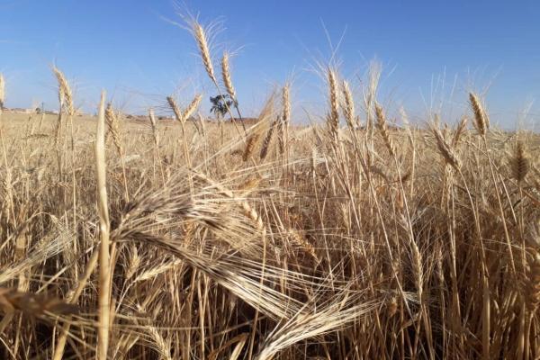تراخيص لعشرات الآبار في مركدة ووعود بتقديم الدعم للزراعة الصيفية