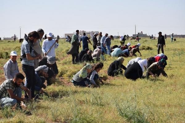 الألفة والتعاون سمة حملة شبيبة PYD لدعم الأسر المحتاجة