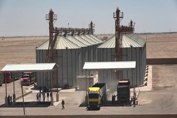 مراكز الحبوب في دير الزّور بدأت باستلام محصول القمح