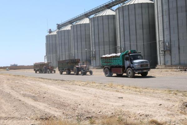 لجنة الاقتصاد تبدأ باستلام القمح في الرقة