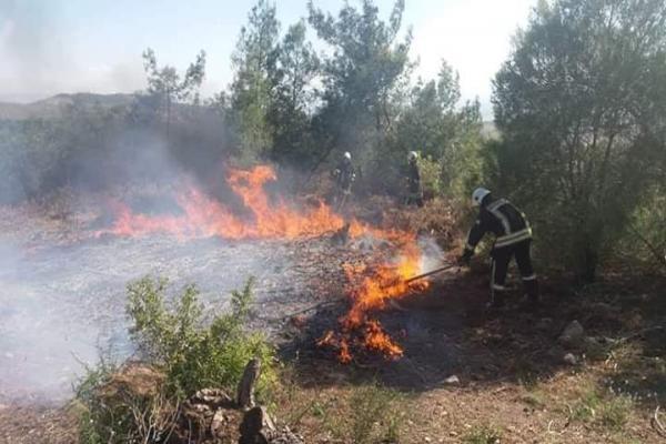 مرتزقة الاحتلال التّركيّ يحرقون الأشجار الحراجية في جندريسة