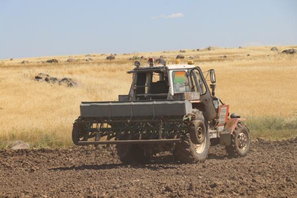 بعد نجاح تجربته الأولى مزارع يزرع الأرز مجدداً في ديرك
