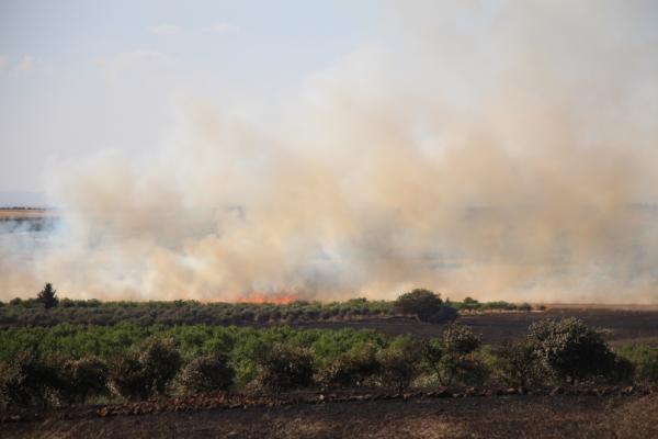 250 هكتاراً احترق في منبج وريفها منذ بداية الموسم