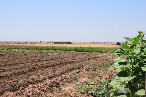 اعتمدوا على الزراعة لتفادي ارتفاع الأسعار لكن همجية الاحتلال التركي تؤثر على زراعتهم