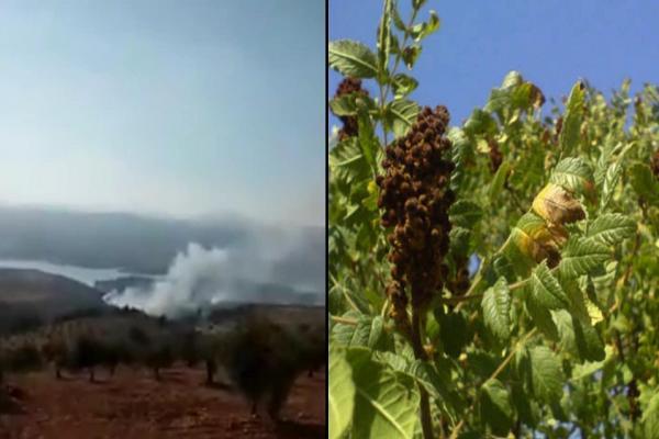 الاحتلال التركي يحرق غابات عفرين ويستولي على محصول السمّاق