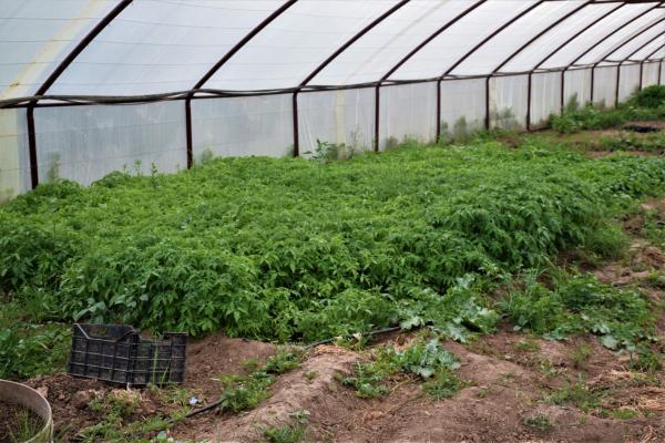 أهالي تل تمر يواجهون الحصار بزراعة الخضروات في منازلهم