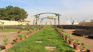 لجنة الاقتصاد في منبج تشجع على زراعة الأشجار