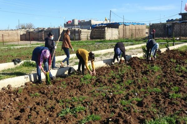 On leader Ocalan's birthday, trees planted in Dêrik