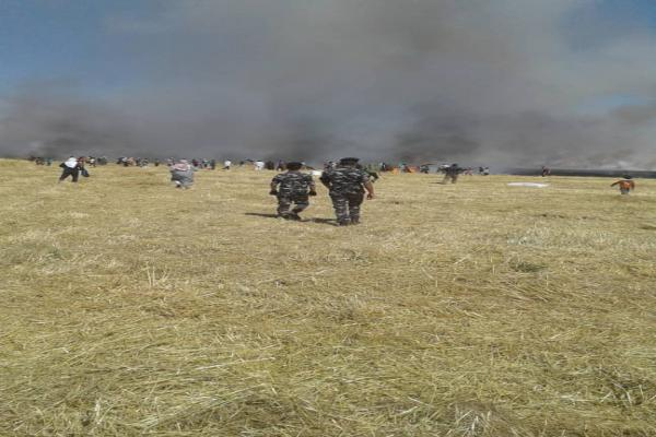 150 dunums of wheat and barley fields burned in Tel Berak countryside