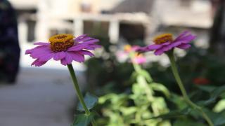 Between destroyed streets' corners ... planting nursery
