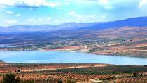 Çeteyan li Efrînê dest danîn ser zêdetirî 10 hezar darên zeytûnan